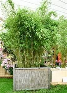 Kübel Bepflanzen Winterhart : 15 must see bambus pflanzen pins bambus als sichtschutz ~ Michelbontemps.com Haus und Dekorationen