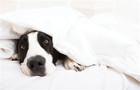 attention dog owners  healthy sleep dont  fido