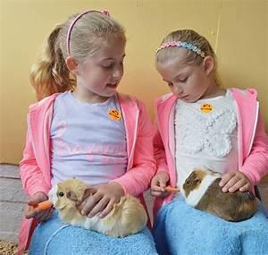 Gallery – Abbotsbury Children's Farm  Children
