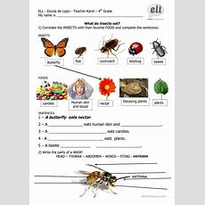 What Do Insects Eat Worksheet  Free Esl Printable Worksheets Made By Teachers