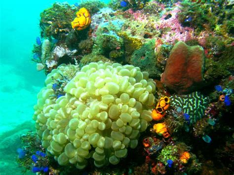 ocean acidification  coral reefs national geographic