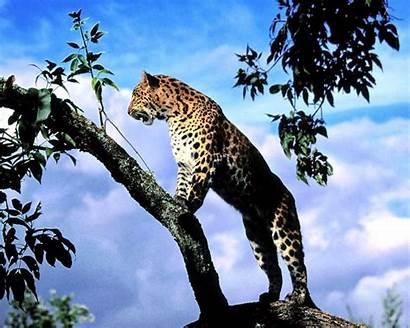 Lovable Amazing Animals Wallpapers Desktop Wild