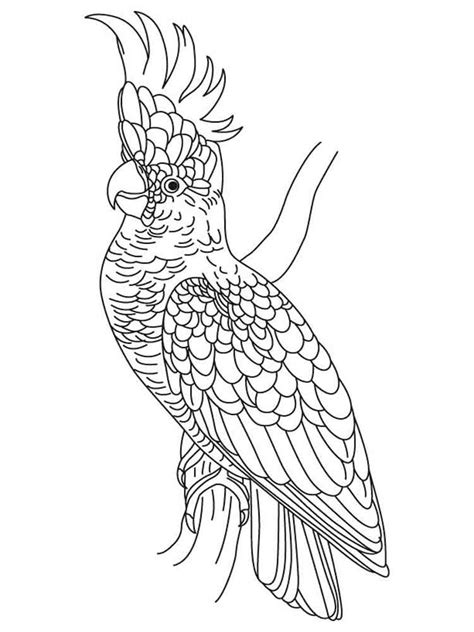 cockatoo coloring pages   print cockatoo