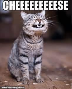 cheese cat cat cheese raise the woof raise the woof