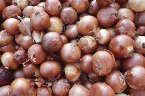 types of onions onion types popsugar food
