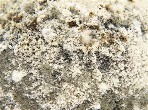 Pilze Im Garten Identifizieren by Pilze Im Blumentopf Ein Giftiger Gelber Pilz Im