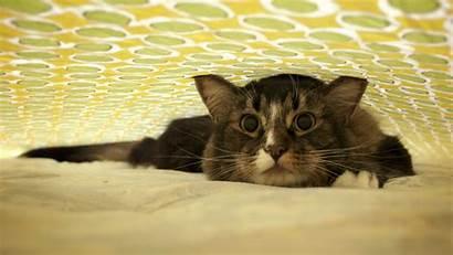 Funny Cat Wallpapers Cats Desktop 2k Fresh