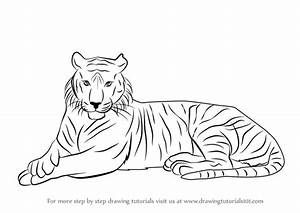 Learn How to Draw a Bengal Tiger (Wild Animals) Step by ...