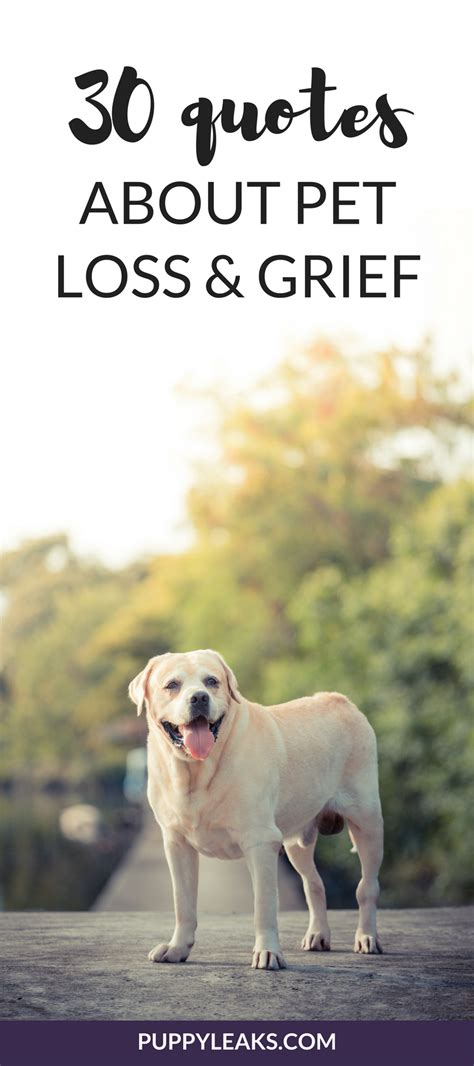 quotes  losing  dog dealing  grief puppy