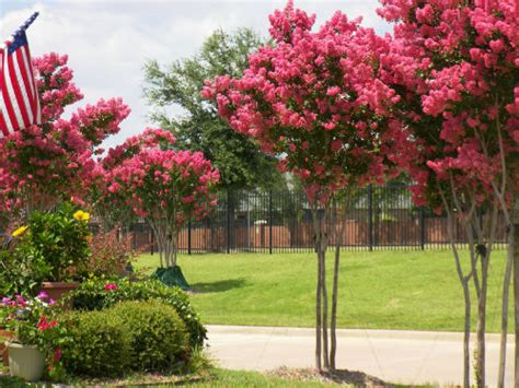 Best Tree For Landscaping In North Texas  Plano Homes & Land