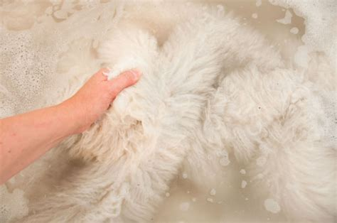 how to clean sheepskin rug how to clean and wash a sheepskin rug 171 gorgeous