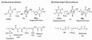 Degradation Mechanisms Under Neutral Conditions  A  And