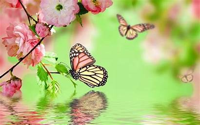 Butterfly Flowers Background Bokeh Desktop Wallpapers Backgrounds