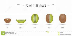 Creative Kiwi Fruit Chart Stock Vector  Illustration Of