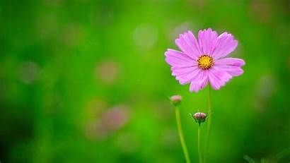 Flowers Nature Wallpapers