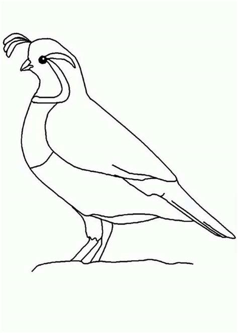 quail outline coloring page color luna