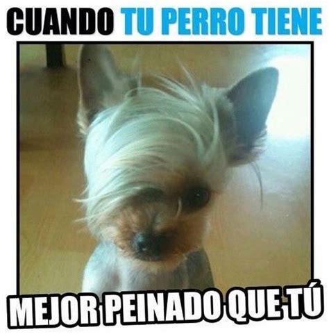 Memes Divertidos - best 25 lol memes ideas on pinterest true memes lol and funny menes