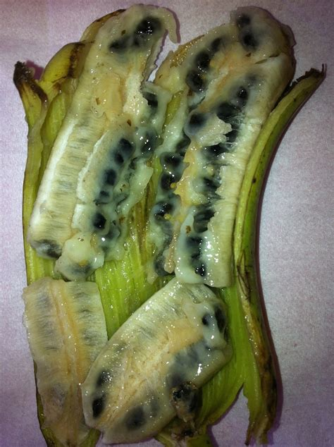 banana with seeds til wild bananas are full of seeds and the ones we eat have been specially bred over the years