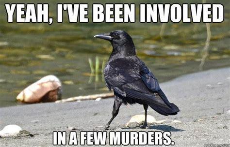 turtle crow raven memes garden pond forums