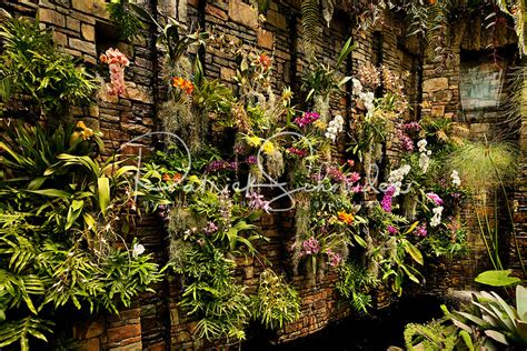 daniel stowe botanical garden plants in summer at belmont nc s daniel stowe