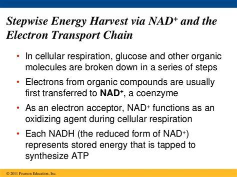 ap bio chp 9 cellular respiration and fermentation
