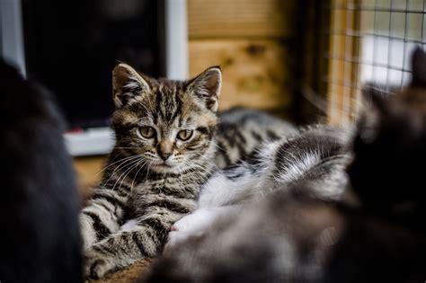 top male cat names blue cross