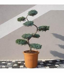 Arbre En Nuage : arbre nuage japonais niwaki juniperus squamata blue carpet ~ Melissatoandfro.com Idées de Décoration