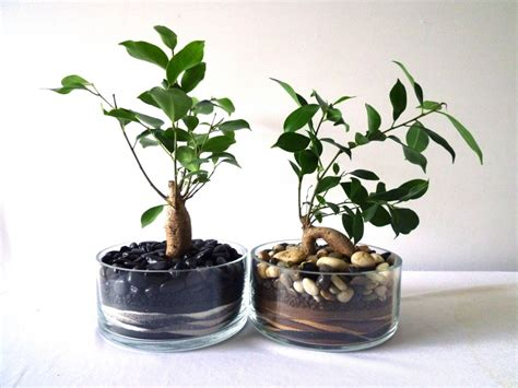 plant care inner growth