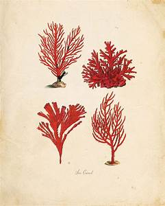 10 best Coral reef drawing images on Pinterest   Coral ...
