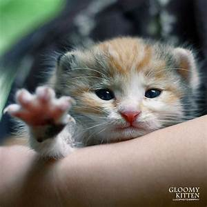 pictures of really cute kittens | gloomy kitten very cute ...