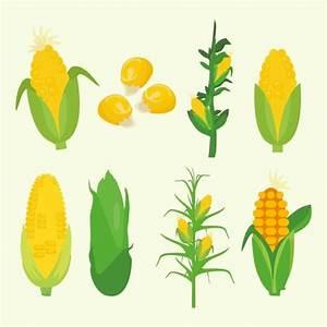 Vector de planta de maíz gratis - Descargue Gráficos y ...