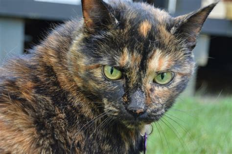 cat colors some cat colors linked to aggression but don t base your pet choice on it huffpost