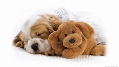 Cute Puppy Wallpapers Happy Hd Sleeping Let