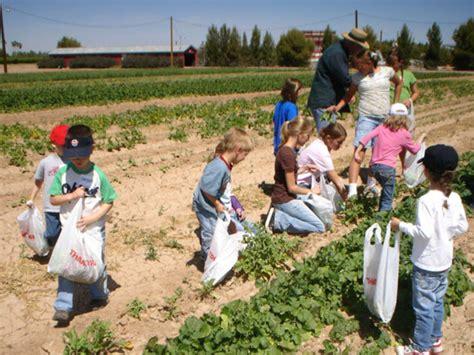 Schnepf Farms Halloween by Schnepf Farms For Pumpkins U Pick And Family Fun