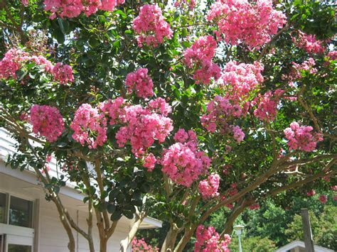 best trees for front yard best trees to plant in your front yard erodriguezdesign com