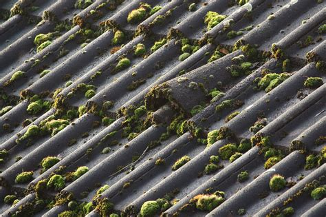 Wichtig Bei Der Dachbeschichtung Der Dachstuhl by Moosservice24 Hausd 228 Cher Reinigung