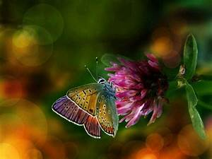 Colorful Wings Flower Butterfly Background Wallpapers ...