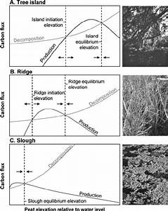 Schematic Diagram Of Organic Matter Production And