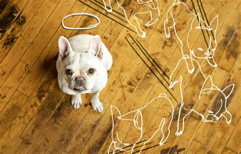 protecting wood floors from nails protecting wood floors from dog claws floor matttroy