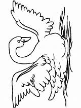 Coloring Pages Swan Birds Swans Graceful sketch template