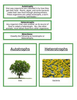 heterotrophs  autotrophs  montessori garden tpt