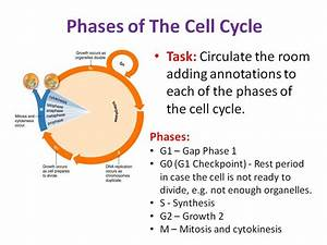 Human cell diagram gcse choice image how to guide and refrence meiosis diagram gcse choice image how to guide and refrence ccuart Images