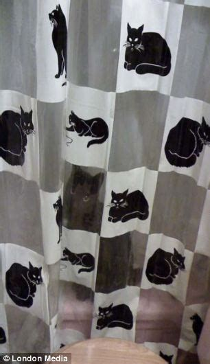 mailonline readers take up the cat camouflage challenge