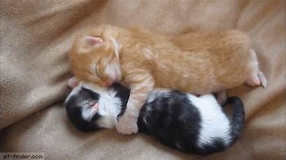 Hugging Kittens Gifs Funny Animated Gatitos Finder