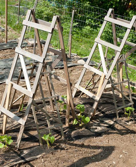 best cucumber trellis design quotes about getting braces off trafalgar braces history