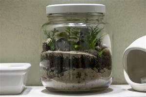 Pot En Verre Pas Cher : terrarium pour plantes tuto pour le faire et plus de 70 super mod les ~ Melissatoandfro.com Idées de Décoration
