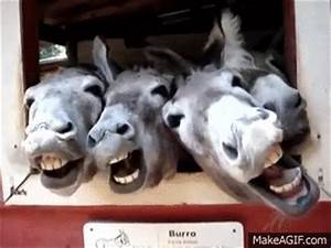 Funny Donkey Pictures With Captions Pictures to Pin on ...