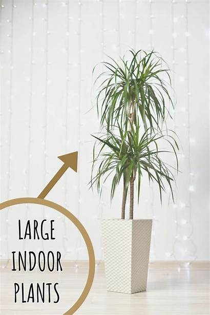 Indoor Plants Houseplants Friendly Pet Spacious Offices