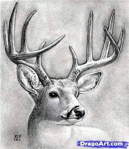 How to Draw a Deer Head, Buck, Dear Head, Step by Step ...