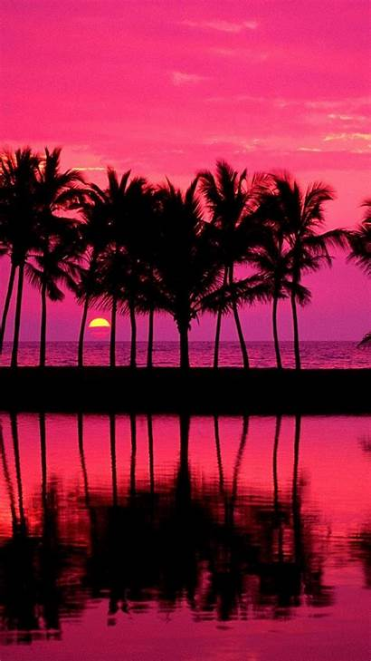Girly Iphone Wallpapers Pink Background Cool Palm